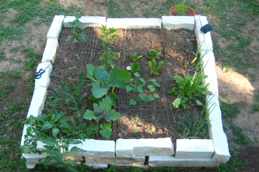 The Square Foot Garden.  I just have one more square to fill and I have to clue what to fill it with...